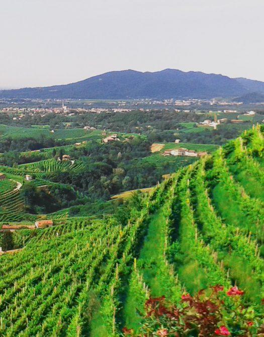 seminare bella Italia 525x670 - Bella Italia - von Südtirol bis Sizilien