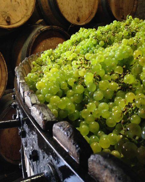 seminare champaner 480x600 - Ganz in Weiß - die schönsten Weißweine Europas